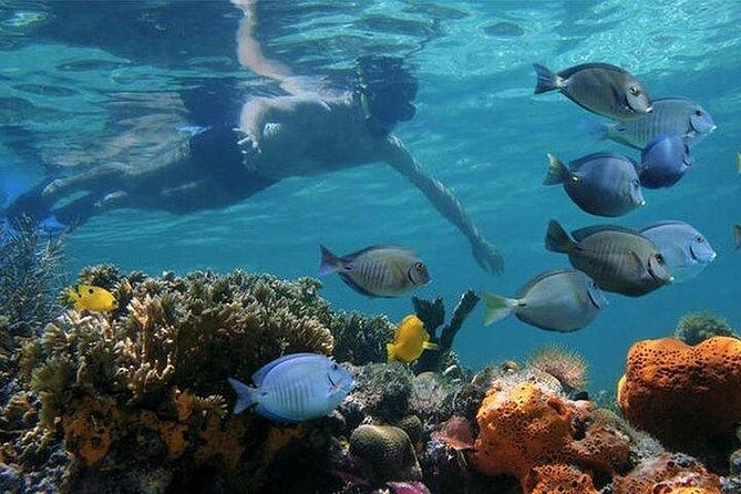 Full-day Dhow Cruise to Mnemba Island reef for Snorkeling with Lunch