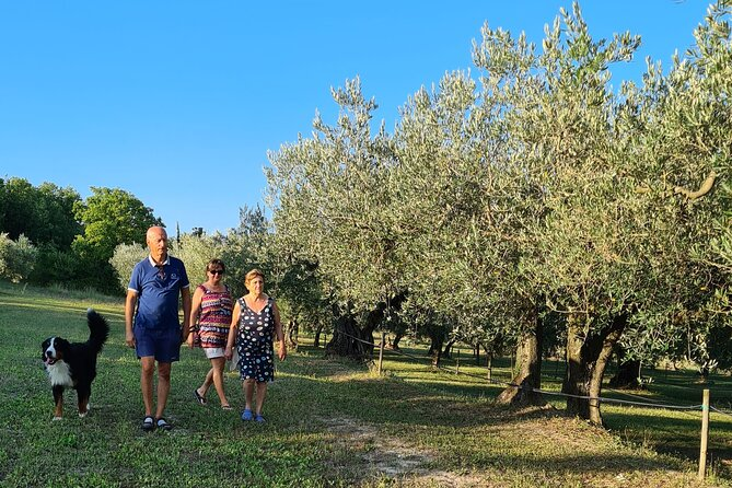 Private tour: Premium Istrian olive oil tasting and grove tour experience
