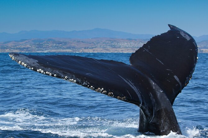 2-Hour Whale Watching Experience in Long Beach