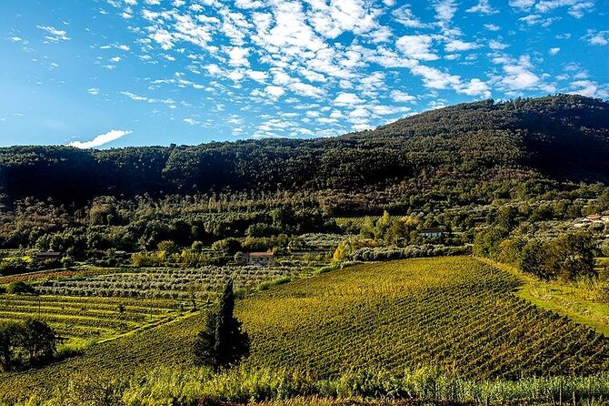 Sant'Agata de' Goti wine tasting and cooking class experience