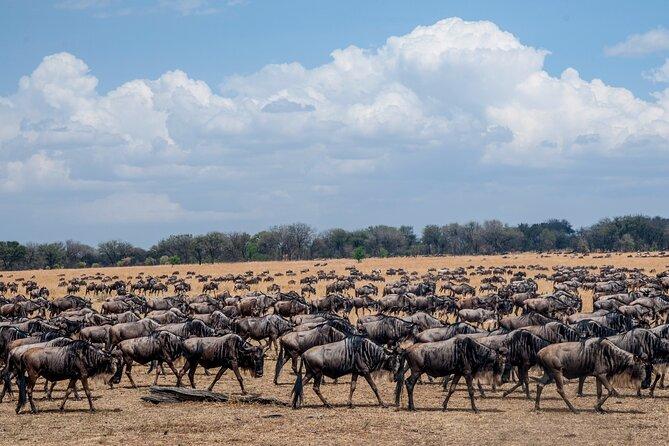 10-Day Serengeti Wildebeest Migration Safari from Arusha