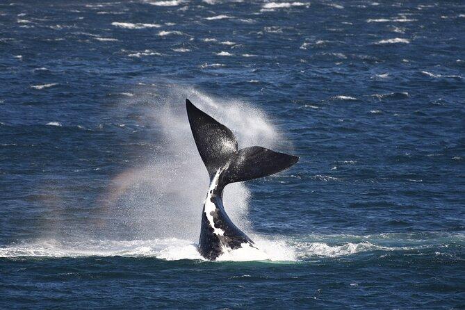 Hermanus Land based Whale Walking Tour