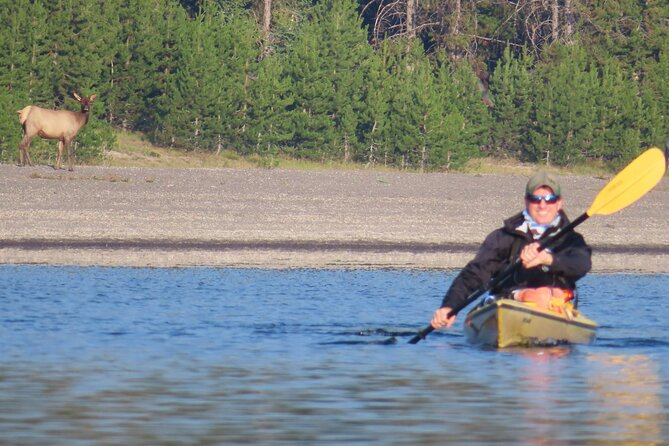4-Hour Morning Sea Kayak on Yellowstone Lake with Lunch
