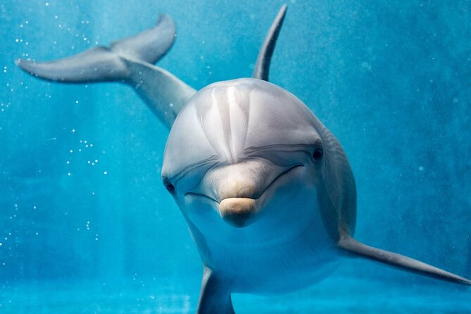 Dolphin House Royal VIP Snorkeling Sea Trip & Water Sports & Seafood - Hurghada