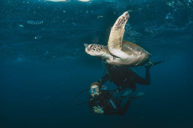 Scuba Diving in Arraial do Cabo by Acqua World