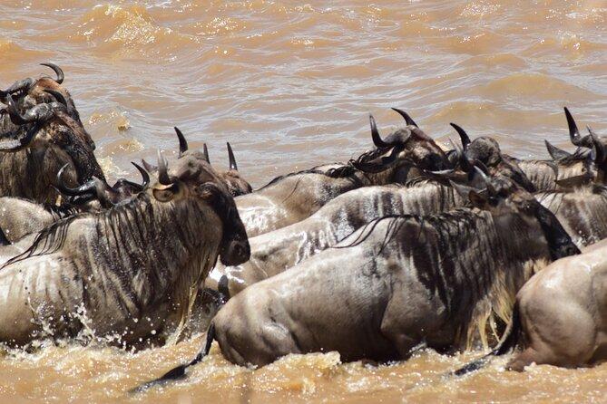 6-Days Serengeti Migration Lodge Safari   River Crossing   BURIGI CHATO SAFARIS