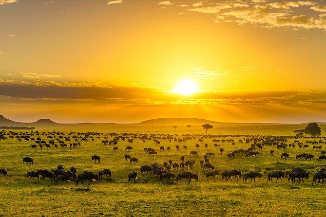 Tanzania 7 days Safari with Roy Safaris