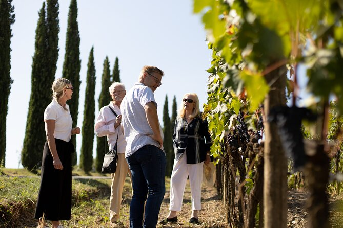 Guided winery tour with atastingand a bite to eat in Montalcino