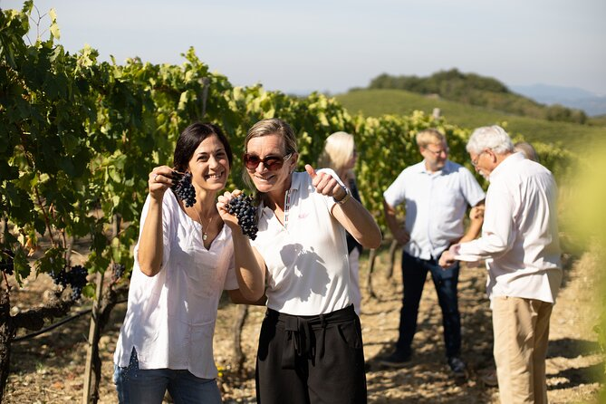 Guided winery tour and winetasting with lunchin Montalcino