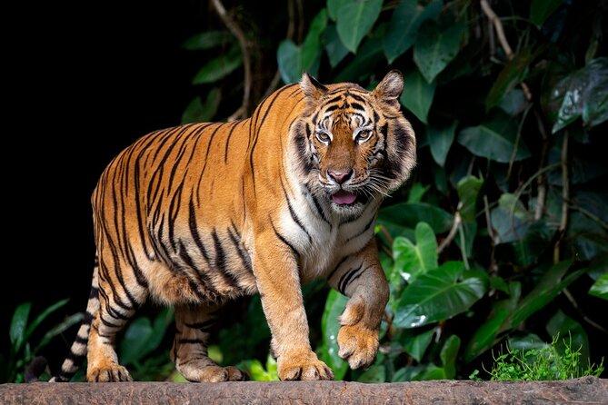 Ranthambore National Park Day Trip From Jaipur w/ Shared Safari
