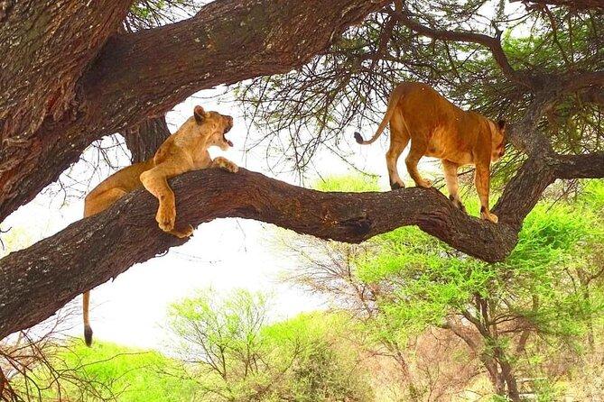 8 days kenya highlights safari ,Maasai Mara ,Amboseli , Tsavo East & Tsavo West