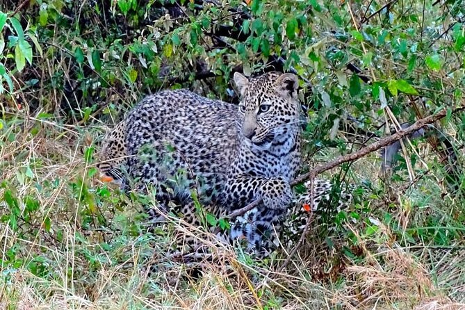 7 Days Tsavo East ,Taita, Amboseli and Sanctuary Safari