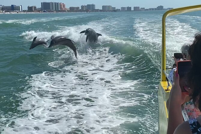 Clearwater Beach Dolphin Speedboat Adventure with Lunch & Transport From Orlando