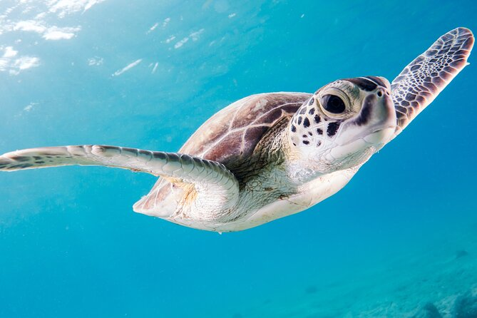 Swim with Turtles! Four Hour Snorkeling Motorboat Tour to Rose Island Beach