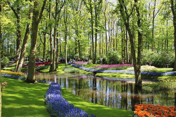 Amsterdam : excursion privée aux champs de tulipes de Keukenhof