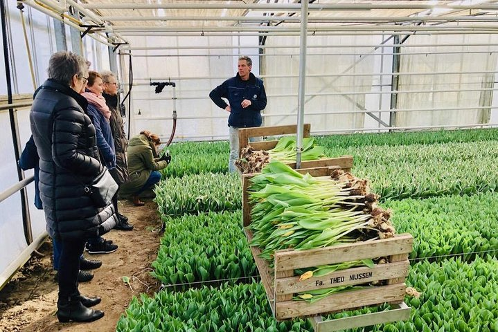 Amsterdam : visite des fermes de tulipes en Hollande