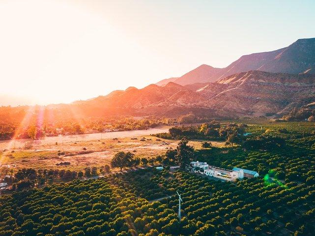Ojai orange farm at sunset