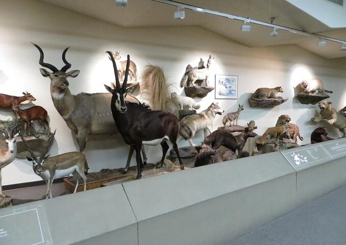 Exhibits at the Las Vegas Natural History Museum in Las Vegas, Nevada