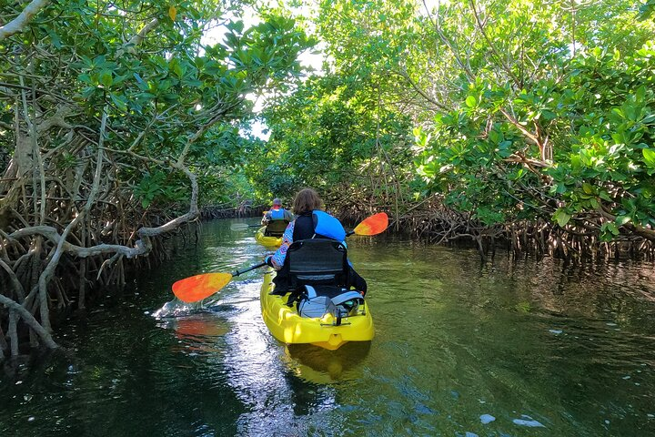 Learn about the mangroves of the keys