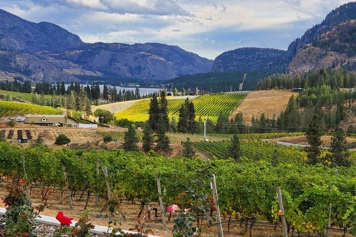Liquidity Winery vineyard and view
