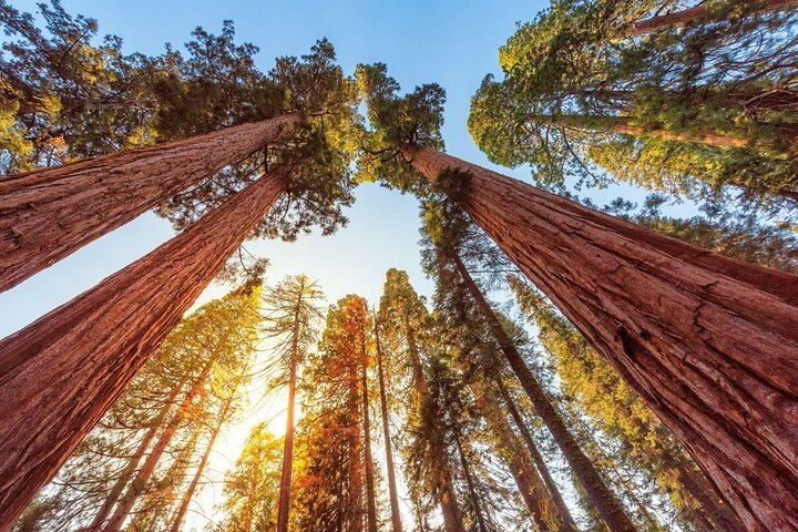 Redwoods; Things to do in Redwood National Park