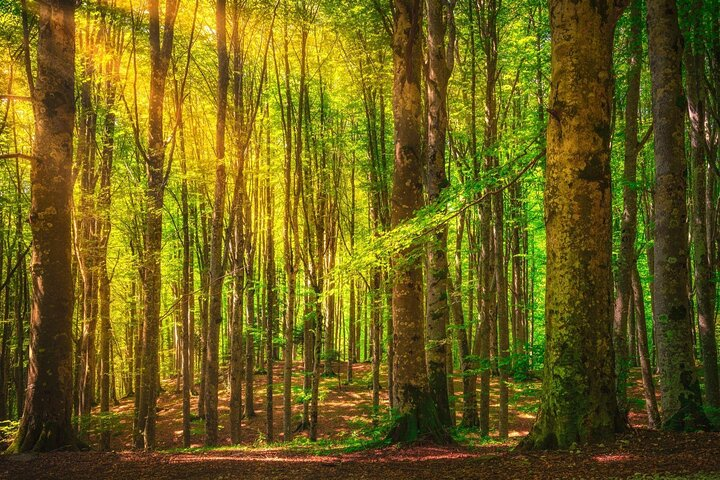Sunlight in the Casentinesi Forest National Park, Italy.