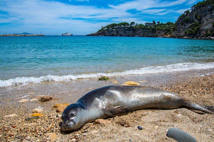 Seal on the beach on a Greek island, Greece.