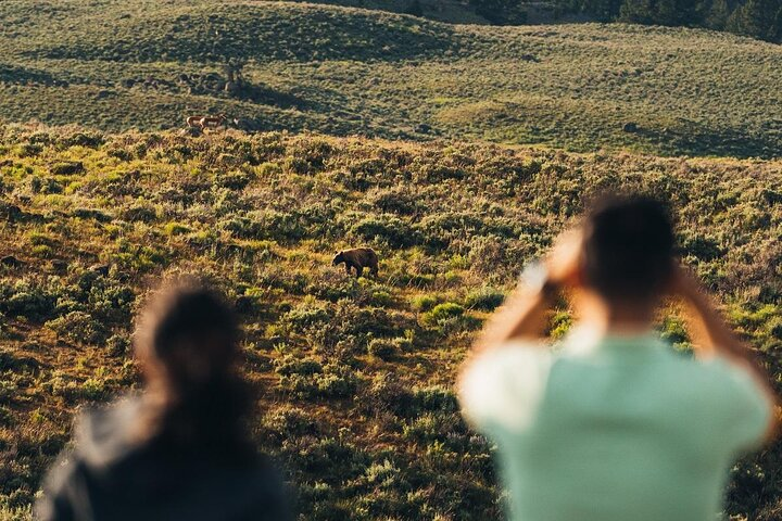Travelers take photos of a bear cub in Yellowstone National Park