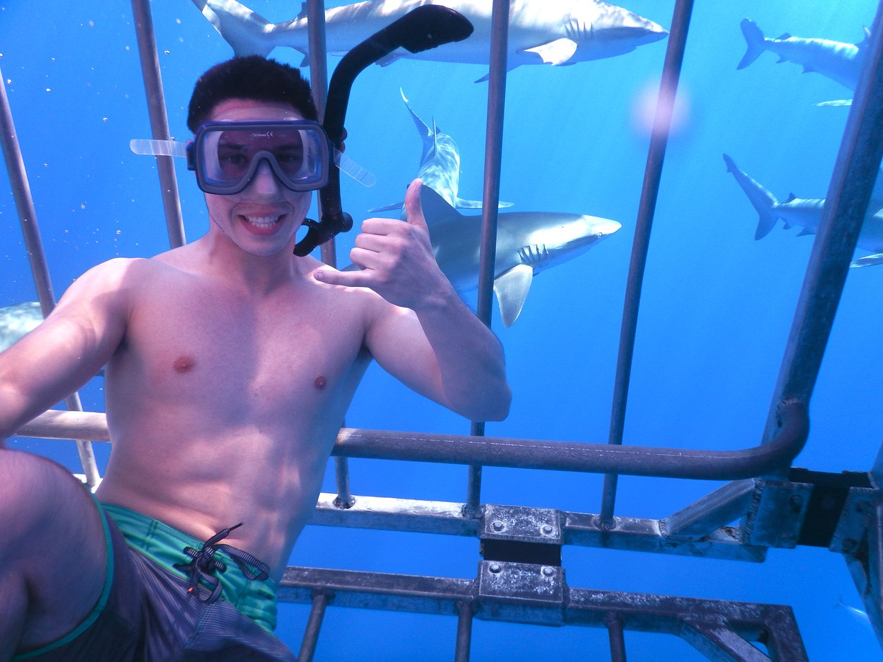 One of the best experiences of my life. It was a very quick ride out to the cage and once we got there, the sharks came fairly quickly. You feel very safe inside the cage and the plexiglas lets you see so much. I'd definitely do it again the next time I'm in Hawaii.